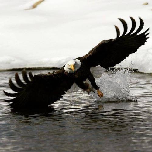 Eagle Spirit 1