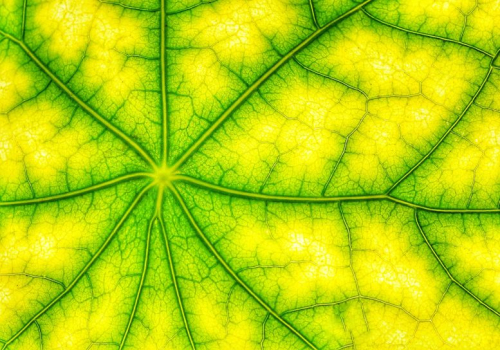 Photosynthesis-Energy-Concept-777x544